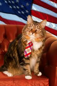 Hank the Maine Coon who ran fur Senate.