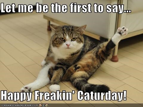Happy caturday - Funny animal pictures with words ...